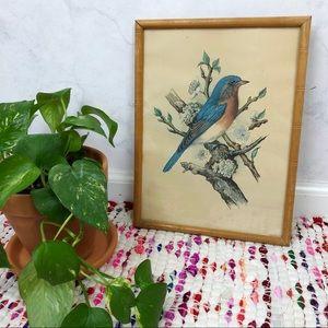 Vintage 60s Bird Floral Lithograph Framed Print